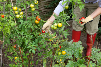 The rewards of community gardening come in many varieties aside from the bounty of fresh fruit.