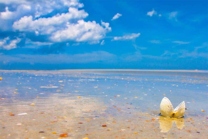 A shell on the beach at Anastasia State Park in St. Johns County, Florida