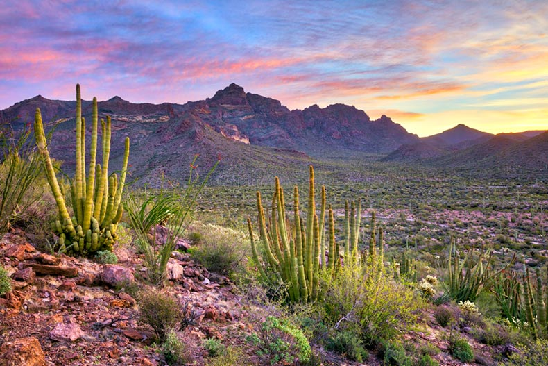 Sunrise view of Organ Pipe Cactus National Monument in Arizona