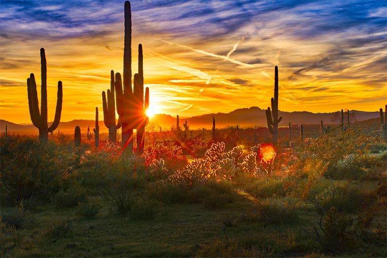Sunset view of cacti dotting the Arizona desert