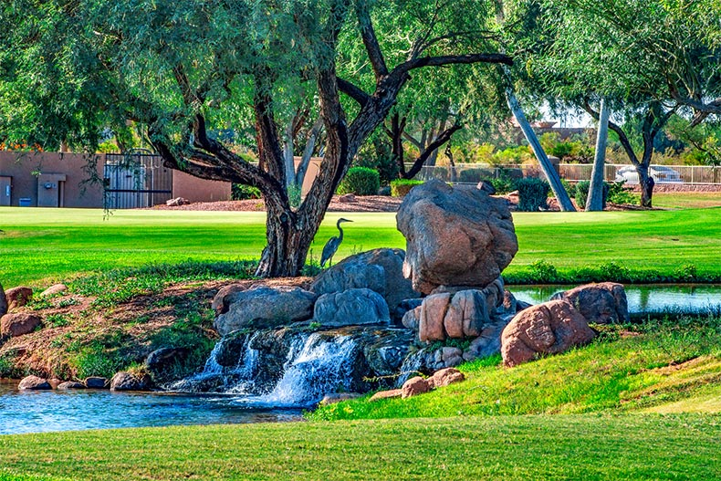 A crane standing beside a stream on a sunny day in Sunland Springs Village in Mesa, Arizona