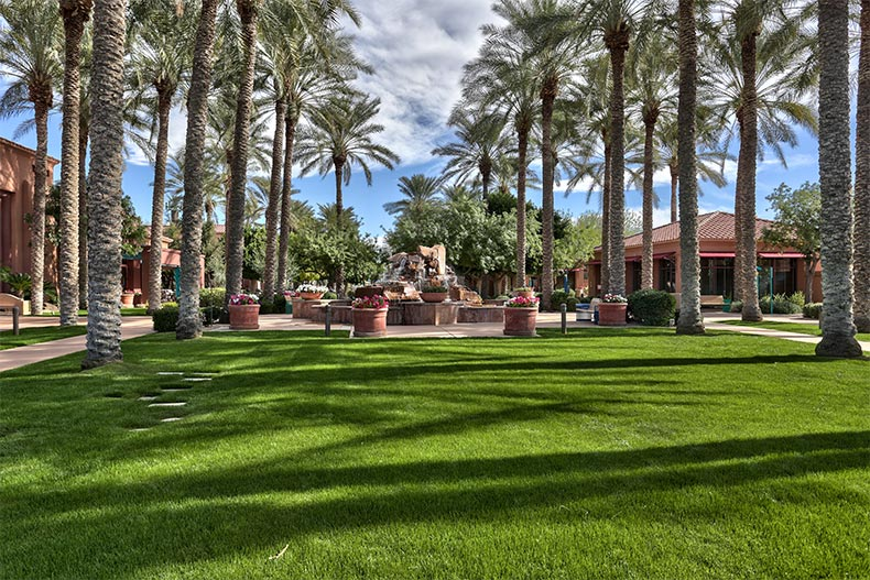 Palm trees lining a community greenspace at Sun City Grand in Surprise, Arizona