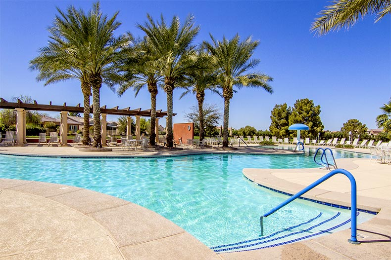 View of palm trees surrounding the resort-style pool at Province in Maricopa, Arizona