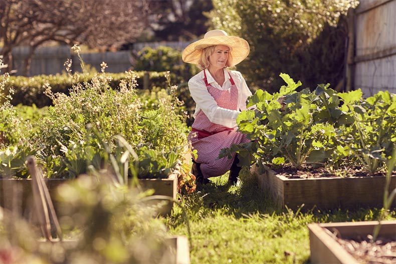 A senior woman wearing a sun hat and kneeling near the raised plant beds in her vegetable garden