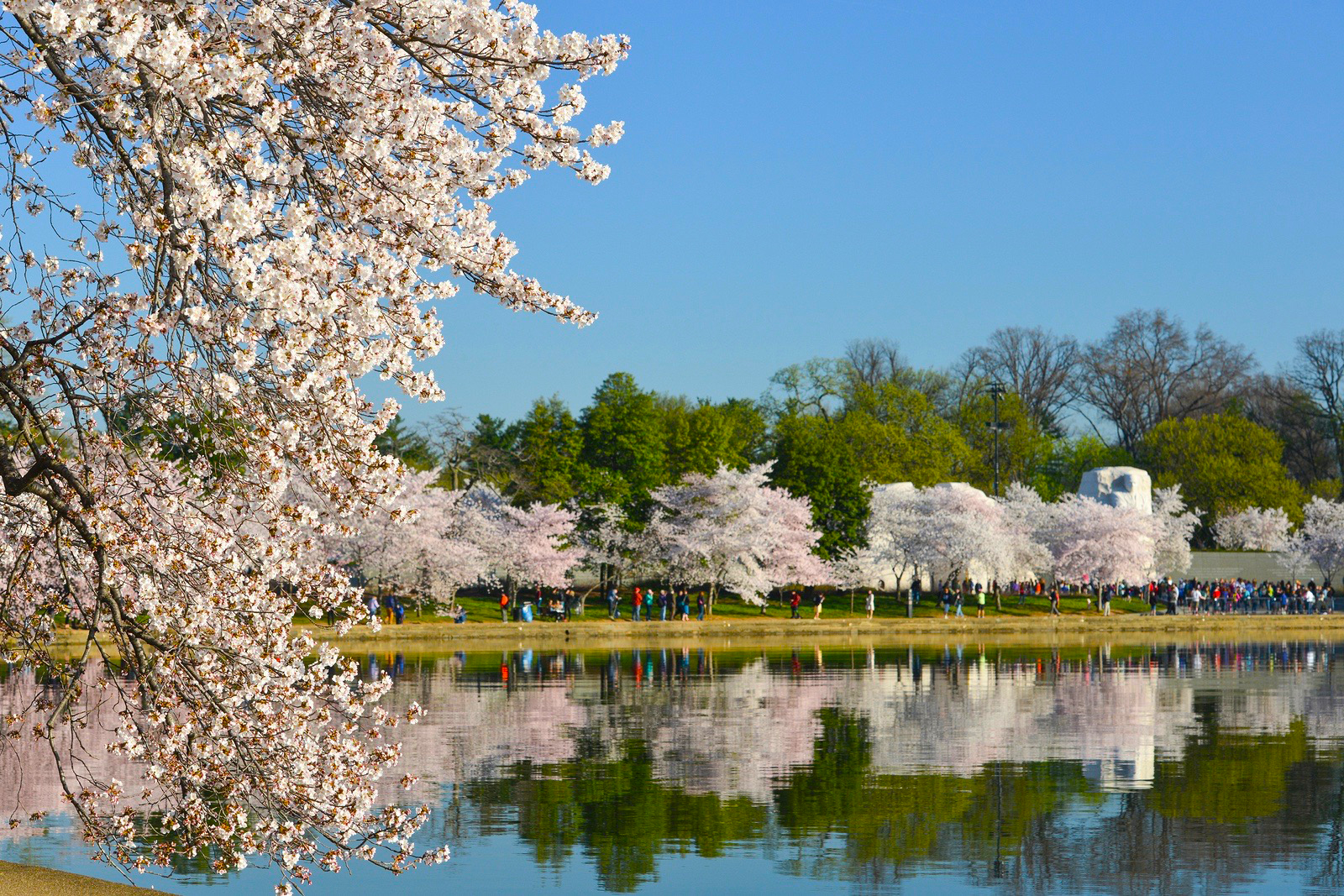 The Cherry Blossom Festival in Washington D.C. makes it a great city to retire if you love Spring.