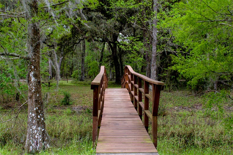 A bridge in the woods of Withlacoochee State Forrest in Brooksville, Florida