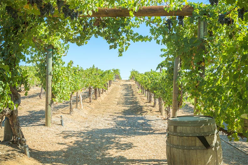 Blue sky over a winery in Temecula Valley, California