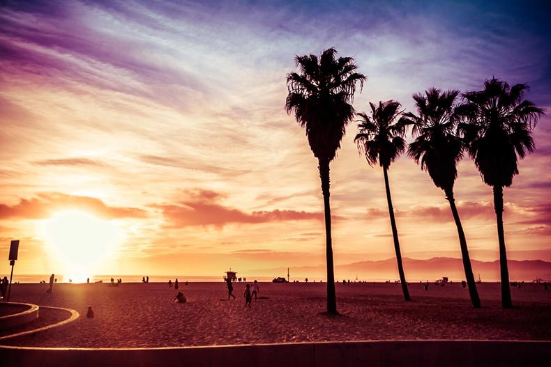Sunset view of Venice Beach with palm trees and beachgoers
