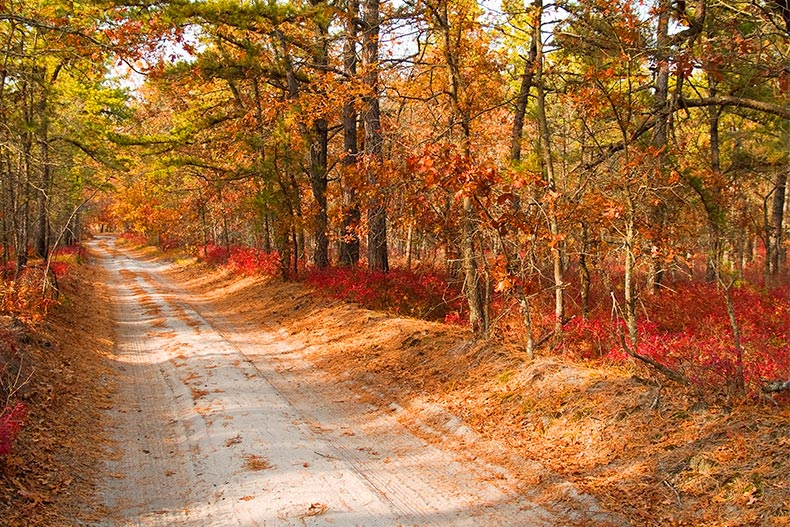 Photo of a country road during autumn in Ocean County, New Jersey