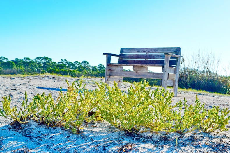 A bench surrounded by foliage along a sandy beach on Honeymoon Island on the Gulf Coast in Central Florida