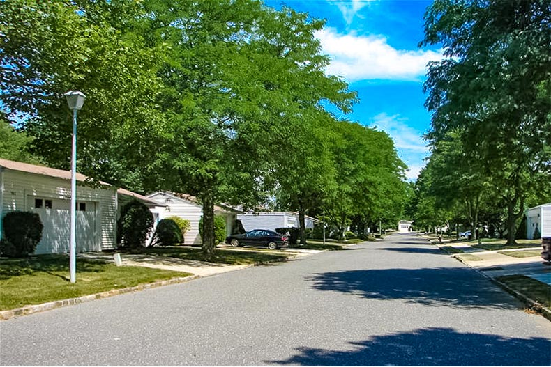 tree-line street in clearbrook in new jersey