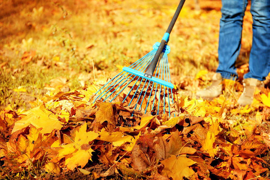 Fall is around the corner, which means its time to get the yard ready for the season change.