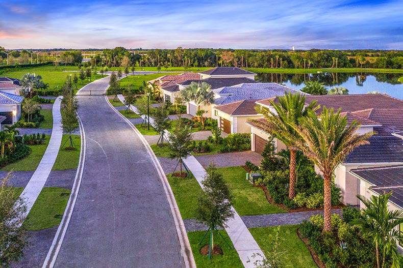 Aerial view of palm trees and houses lining a residential street in Cresswind at Lakewood Ranch in Lakewood Ranch, Florida