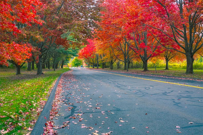Red trees lining an asphalt road in Connecticut