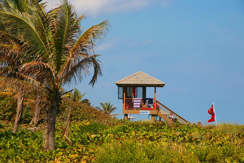 A lifeguard station at Delray Beach in Florida with thick, green foliage below