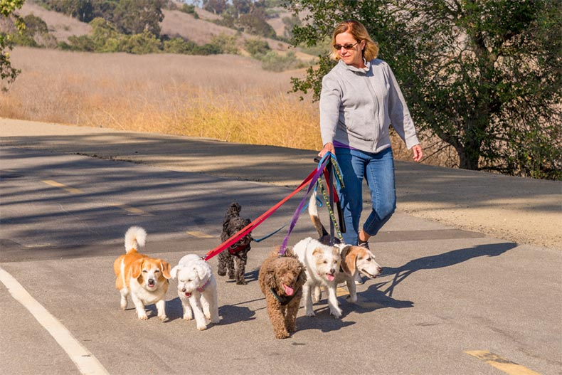 An older woman making extra money as a dog walker