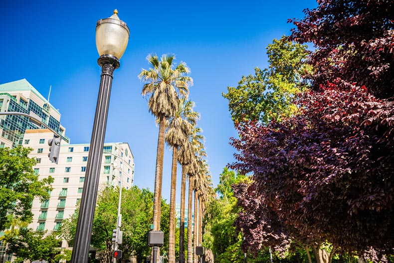 A lamp post and palm trees in Sacramento, California