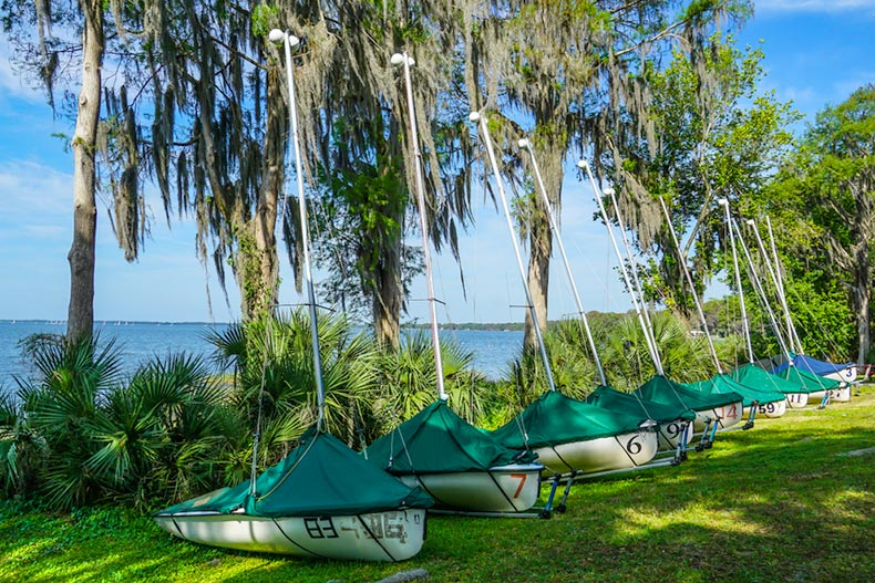 Sailboats lined up beside trees with Spanish moss near Lake Eustis in Florida