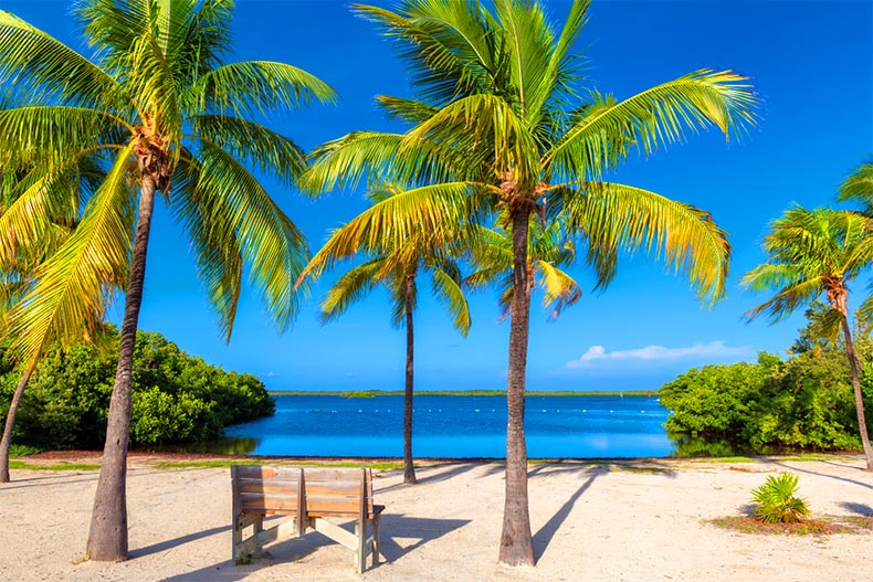 A bench under palm trees on a tropical beach in the Florida Keys