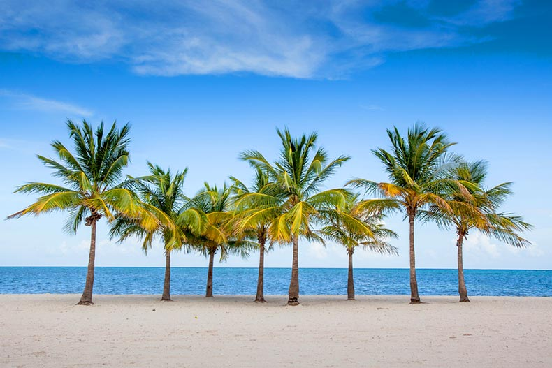 Palm trees on a beach in Key Biscayne, Florida