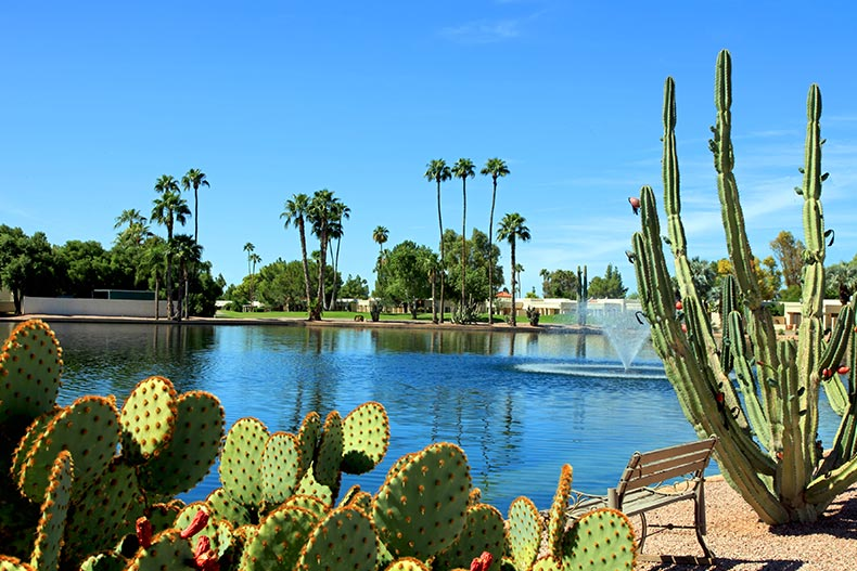 Cacti and palm trees surrounding a picturesque pond at Fountain of the Sun in Mesa, Arizona