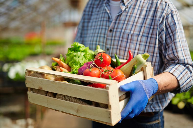 Closeup on the hands of a man standing in a greenhouse and carrying a wooden box full of fresh vegetables