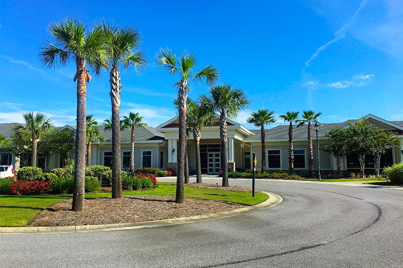 View of a street lined with palm trees leading to a clubhouse at Sun City Hilton Head in Bluffton, South Carolina
