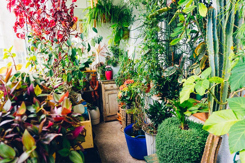 Many plants covering the walls and floors of a room