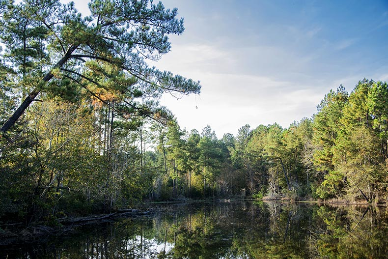 Trees surrounding a picturesque pond in DeSoto National Forest near Laurel, Mississippi