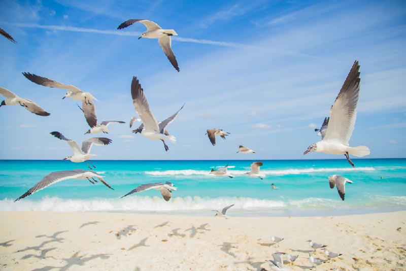 tropical beach in florida with group of seagulls flying away