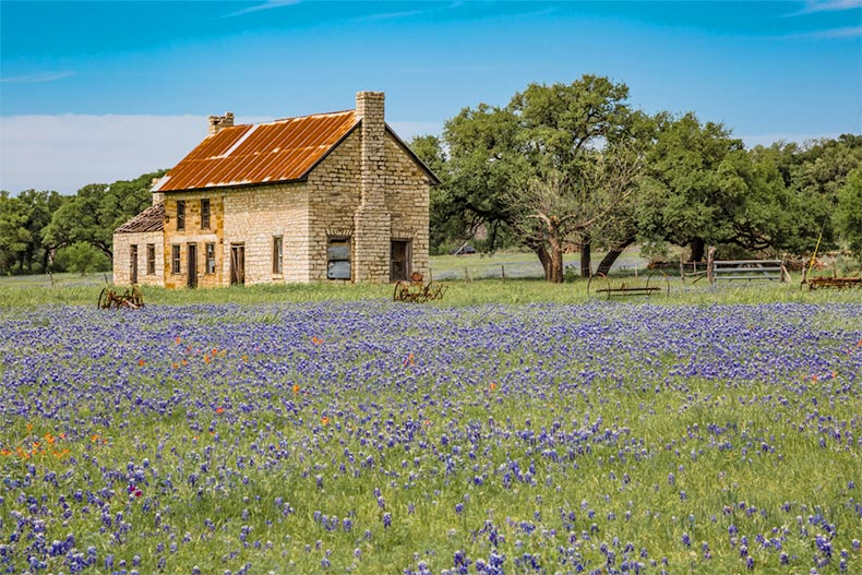 A lone house in a field of bluebonnets in Texas Hill Country