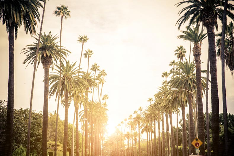 Palm trees lining a street with a sunset behind them in Los Angeles