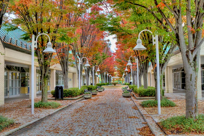 Tree-lined walkway in Columbia, Maryland during the fall