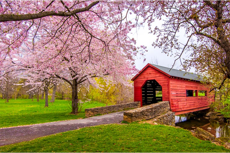 Cherry blossoms over a covered bridge in Frederick, Maryland