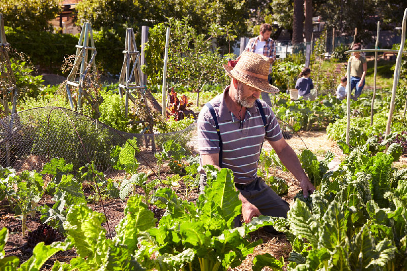 older people gardening in community garden