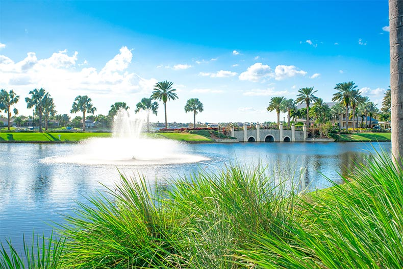 Palm trees surrounding a picturesque pond at MiraBay in Apollo Beach, Florida