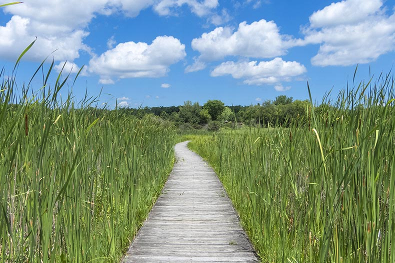 A boardwalk through tall grasses in Moraine Hills State Park in McHenry, Illinois