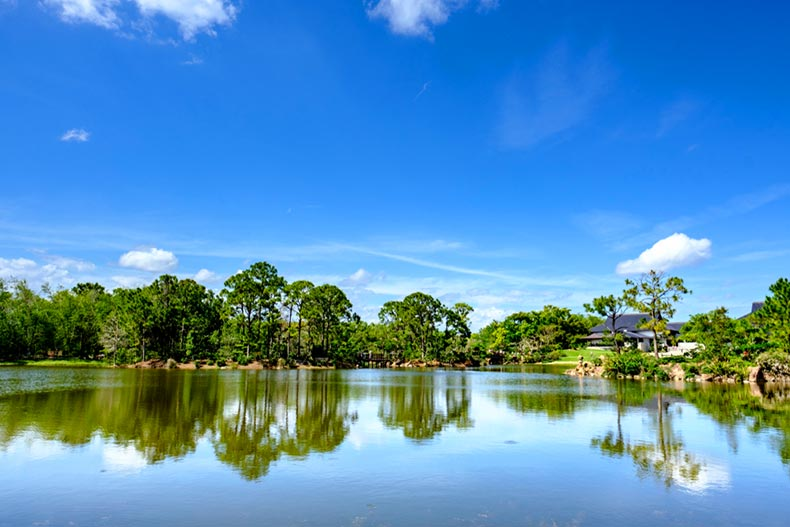 Trees surrounding a reflective pond on a clear day at the Morikami Gardens in Delray Beach, Florida
