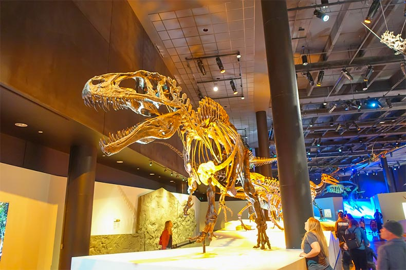 Slothzilla One Of The Largest Mounted Skeletons A Giant Ground Sloth That