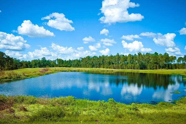 Blue sky over a summer pond in Wesley Chapel, Florida
