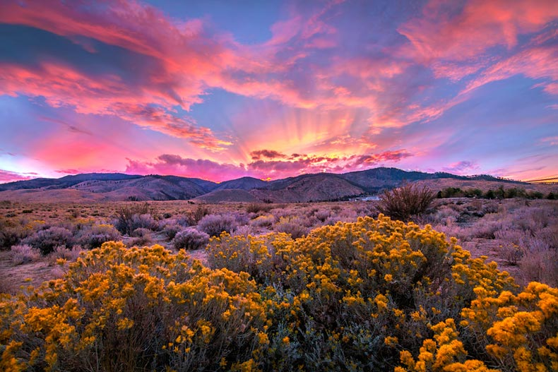 A dramatic sunset over sagebrush in the Nevada Desert