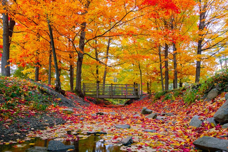 Colorful fall foliage in the northeast USA