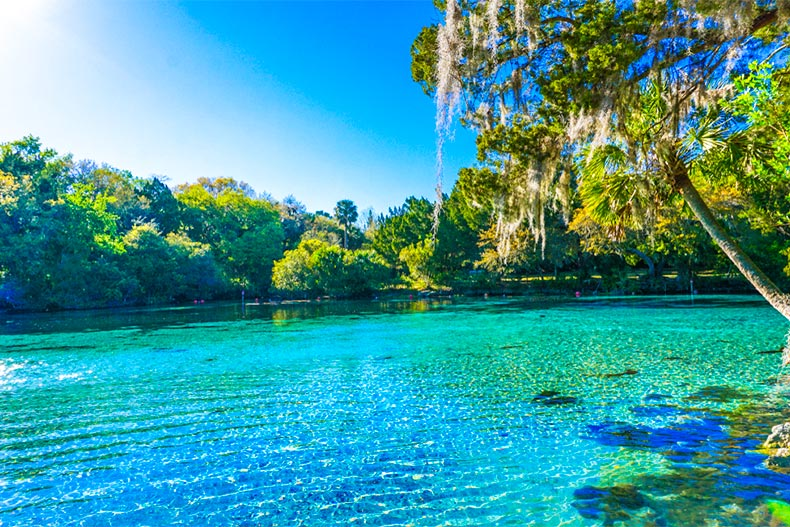 Blue and green spring water surrounded by trees in Ocala, Florida