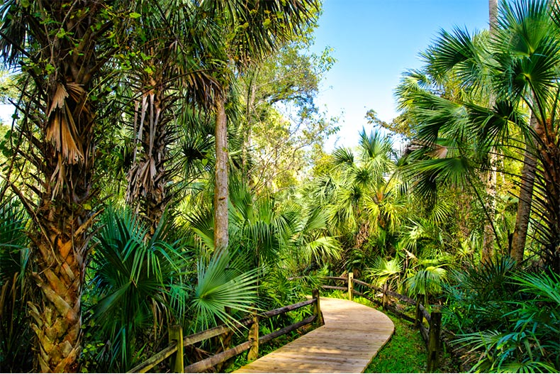 Waling path through palm trees and plants in Ocala National Forest