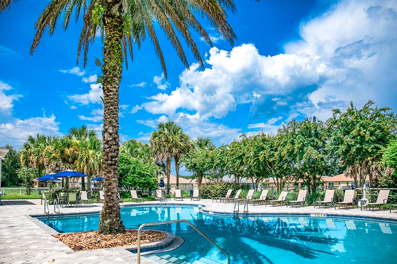 Palm trees surrounding the outdoor pool and patio at On Top of the World in Ocala, Florida