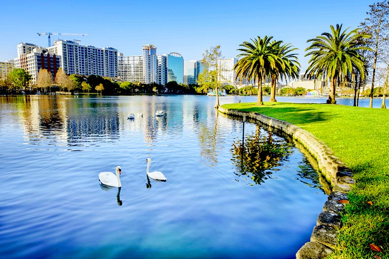 Two swans in the water at Lake Eola Park in Orlando, Florida with the view of the city skyline in the background
