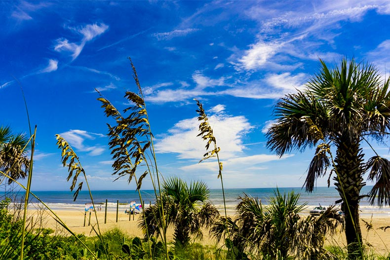 Tall grass and palm tree in front of Ormond Beach shores at Atlantic Ocean