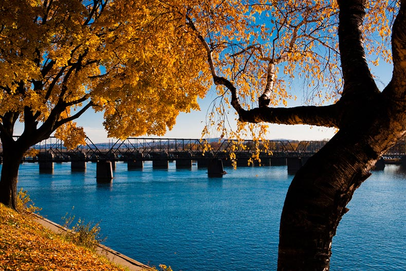 Late autumn colors in Riverfront Park along the Susquehanna River in Harrisburg, Pennsylvania