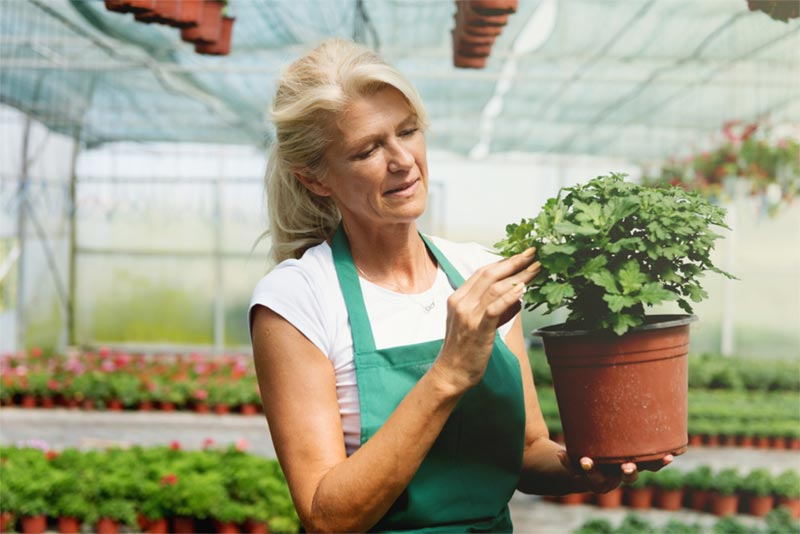 senior woman working in greenhouse holding plant