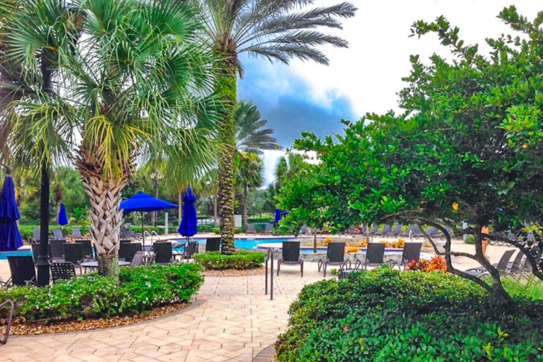 Palm trees surrounding the outdoor pool and patio at Pelican Preserve in Fort Myers, Florida